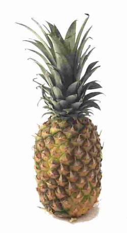 pineapple.jpeg